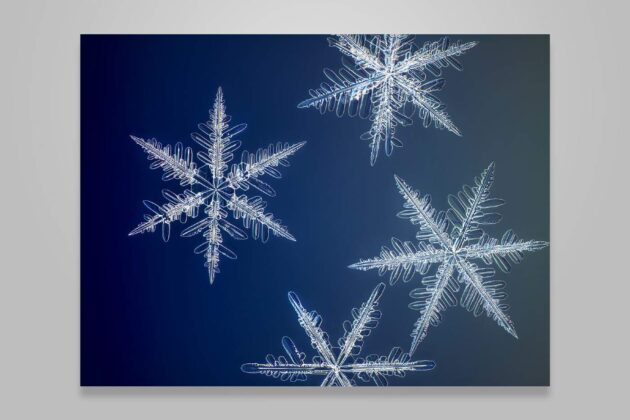Check Out the Greatest Snowflake Photos Ever Taken With Vividly High Resolution